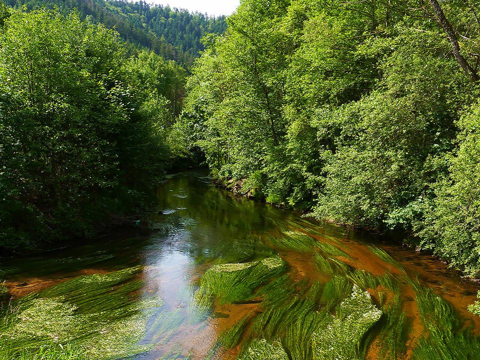 Restauration de la continuité écologique sur le ruisseau de la Fauvette