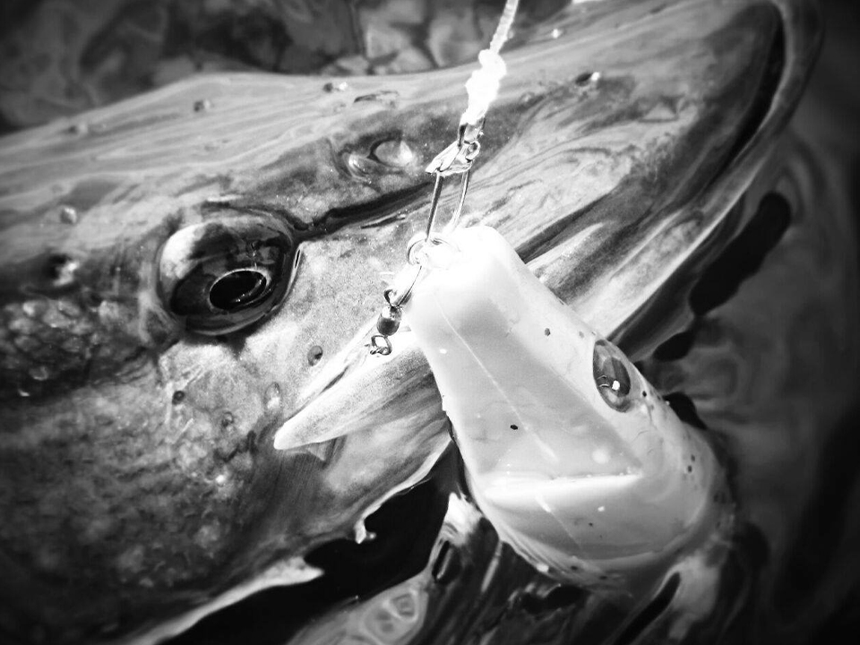 Fermeture provisoire de la pêche à Bouzey